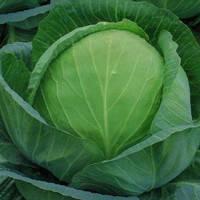 Семена капусты белокочанной средней Ринда F1 (Rinda F1) 2 500 сем.