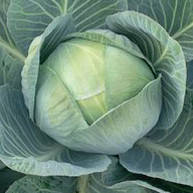 Семена капусты белокочанной поздней Арривист F1 (Arrivist F1) 2 500 сем.