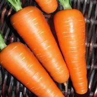 Семена моркови Абликсо F1  (Ablixo F1) 1 000 000 сем.