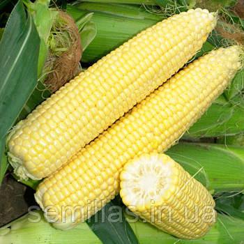 Семена кукурузы Сигнет F1 (Signet F1) 5 000 сем., сахарной
