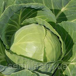 Семена капусты Миррор F1 (Mirror F1) 2 500 сем., белокочанной ранней