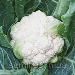 Семена капусты цветной Лекану F1 (Lecanu F1) 2 500 сем.
