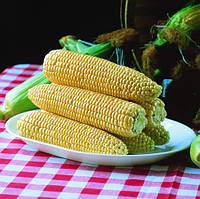Семена кукурузы сахарной Спирит F1 (Spirit F1) 100 000 сем.