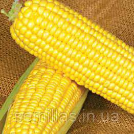 Семена кукурузы сахарной Оверленд F1 (Overland F1) 100 000 сем.