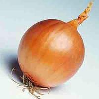 Семена лука репчатого Хилтон F1 (Hilton F1) 250 000 сем.