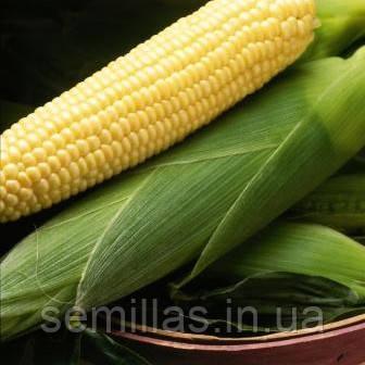 Семена кукурузы сахарной Бостон F1 (Boston F1) 100 000 сем.