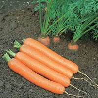 Семена моркови Дордонь F1 (Dordogne F1) 50 000 сем. (1,40-1,60 мм)