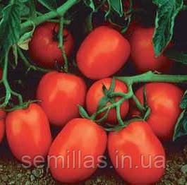Семена томата для переработки Чибли F1 (Chibli F1) 2 500 сем.