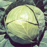Семена капусты Балбро F1 (Balbro F1), 2500 сем., белокочанной ранней
