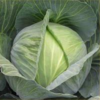 Семена капусты Сати F1 (Satie F1), 2500 сем., белокочанной поздней