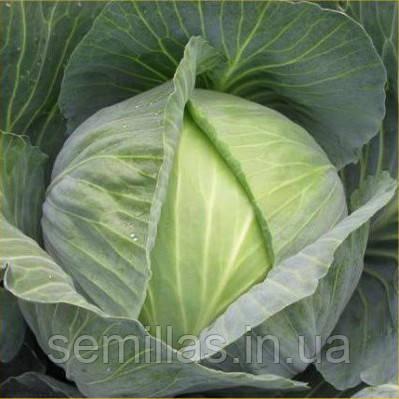 Семена капусты Сати F1 (Satie F1), 2500 сем. (калибр), белокочанной поздней