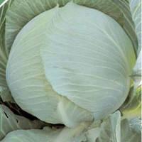 Семена капусты Гилсон F1 (Gilson F1), 2500 сем. (калибр.), белокочанной поздней