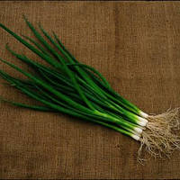 Семена лука на перо Савел (Savel), 50000 сем.