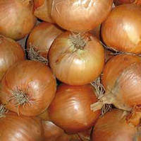 Семена лука Тареско F1 (Taresko F1), 250000 сем., репчатого