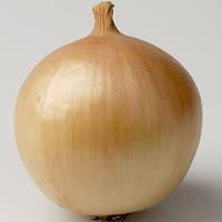 Семена лука Франциско (Franzisco), 250000 сем., репчатого