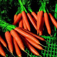 Семена моркови Волкано F1 (Volcano F1) 100 000 сем.