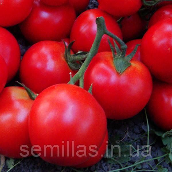 Семена томата Джадело F1 (Jadelo F1), 500 сем., красного индетерминантного (высокорослого)