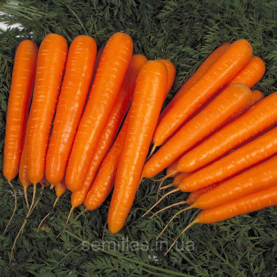 Семена моркови Лагуна F1 (Laguna F1), 25000 сем. (1,6-1,8 мм)