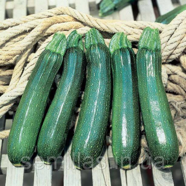 Семена кабачка Тармино F1 (Tarrmino F1) 500 сем.