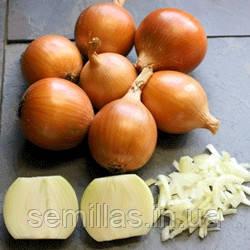 Семена лука репчатого Тамара F1 (Tamara F1) 10 000 сем.