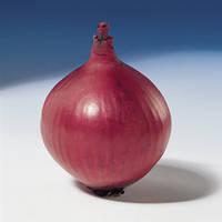 Семена лука репчатого Ред Барон (Red Baron) 10 000 сем.