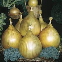 Семена лука репчатого Ексибишн (Exhibition) 10 000 сем.