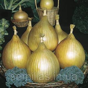 Семена лука репчатого Ексибишн (Exhibition) 250 000 сем.