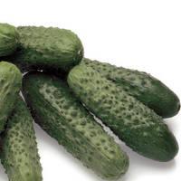 Семена огурца партенокарпического (самоопыляемого) Престо F1 (Presto F1) 1 000 сем.