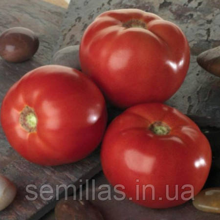 Семена томата детерминантного (кустового) Белла Роса F1 (Bella Rosa F1) 1 000 сем.