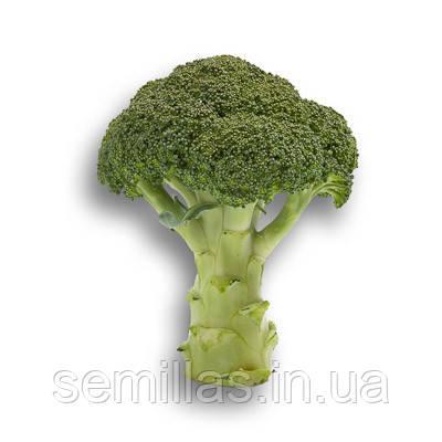 Семена капусты Агасси F1 (Agassi F1), 1000 сем. (калибр.), брокколи