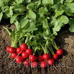 Семена редиса Рудольф (Rudolf) 50 гр.