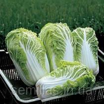 Семена капусты пекинской Билко F1 (Bilko F1) 2 500 сем.