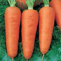 Семена моркови Кампино (Kampino) 500 гр.