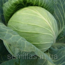 Семена капусты белокочанной ранней Фарао F1 (Farao F1) 2 500 сем.