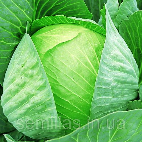 Семена капусты белокочанной средней Мегатон F1 (Megaton F1) 2 500 сем.