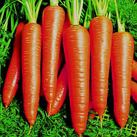 Семена моркови Вита Лонга (Vita Longa) 50 гр.