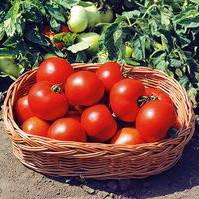 Семена томата детерминантного (кустового) Полбиг F1 (Polbig F1) 5 гр.