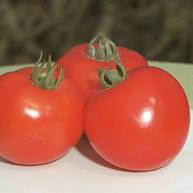 Семена томата детерминантного (кустового) Полфаст F1 (Polfast F1) 5 гр.