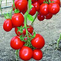 Семена томата детерминантного (кустового) Ричи F1 (Ritchy F1) 5 гр.