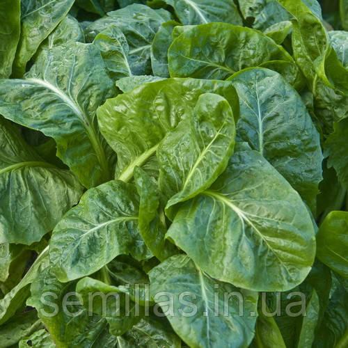 Семена шпината Спирос F1 (Spiros F1), 50000 сем.