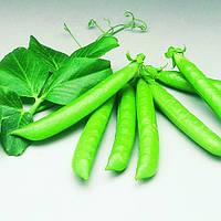 Семена гороха овощного Сомервуд (Somerwood) 100 000 сем.
