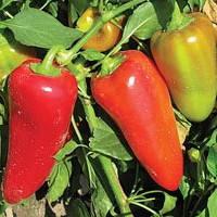 Семена перца сладкого Любовь F1 (Lyubov F1) 500 сем.