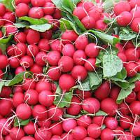 Семена редиса Дабел F1 (Dabel F1), 10000 сем. (калибр.)