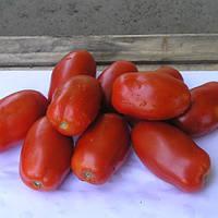 Семена томата Инкac F1 (Incas F1), 1000 сем., для переработки