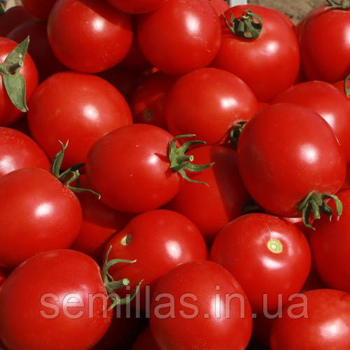 Семена томата Солероссо F1 (Solerosso F1), 25000 сем., для переработки