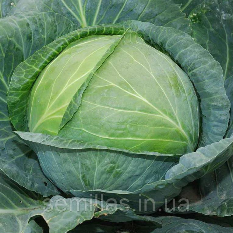 Семена капусты Центурион F1 (Centurion F1), 10000 сем., белокочанной поздней