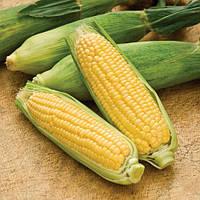 Семена кукурузы сахарной Лендмарк F1 (Landmark F1) 10 кг.