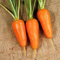 Семена моркови Болтекс (Boltex), 5 кг.