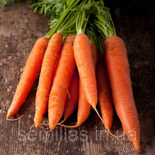 Семена моркови Скарла (Scarla), 500 гр.