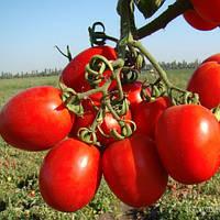 Семена томата Лиона F1 (Liona F1), 5000 сем., для переработки